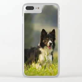 Border Collie In A Field Clear iPhone Case
