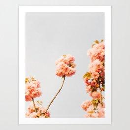 Pillars Of Pastel Pink Flowers Romantic Vintage Florals Art Print