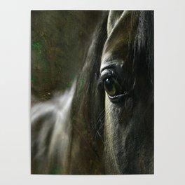 Arabian horse's eye Poster