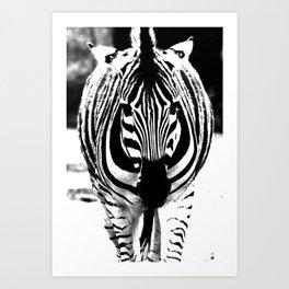 Bold Zebra Art Print