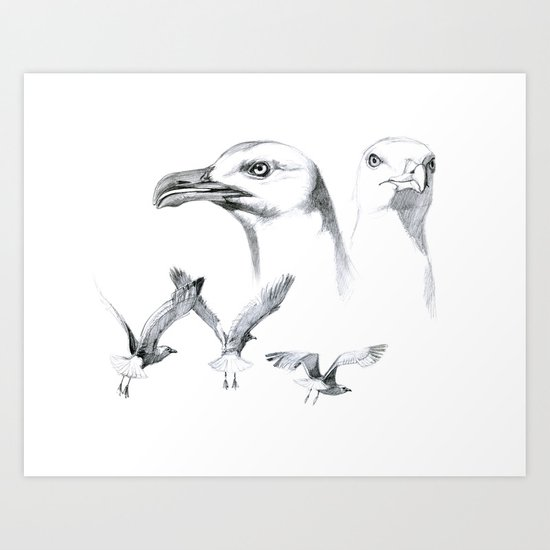 Great Black-backed Gull - Larus marinus   SK043 Art Print