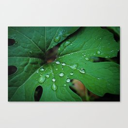 Bloodroot & Raindrops Botanical Fine Art Print, Nature Art, Texture Canvas Print