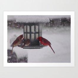 Bird Feeder Art Print