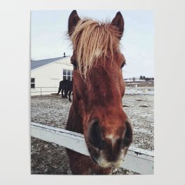Brown horse face Poster