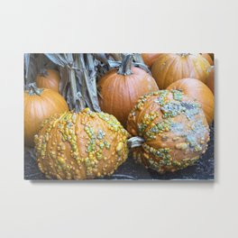 Longwood Gardens Autumn Series 332 Metal Print