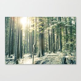 Sun in snowy Forest  Canvas Print