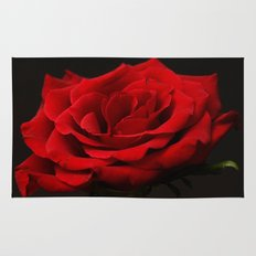 Portrait of a red rose Rug