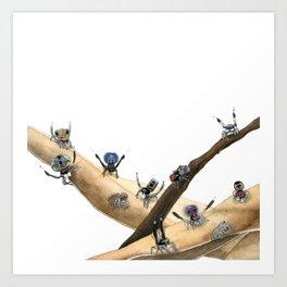 Maratus Mating Displays 1 Art Print