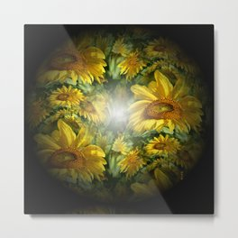 Sunflowers in the Light.... Metal Print