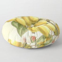 Pyrus ringo 'Chinese Pearleaf Crabapple' 1909 Floor Pillow