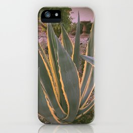 Agave Americana (Yellow Ribbons) iPhone Case