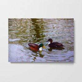 Duck duo Metal Print