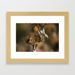 Burdock in the Fall Framed Art Print