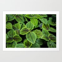 Just Green Art Print