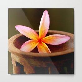 Plumeria in Kava Bowl Metal Print