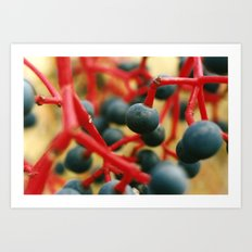 Wild Berries of the Don Art Print