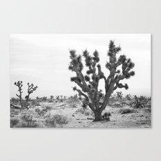 joshua tree bw Canvas Print