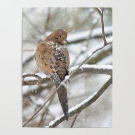 Winter Dove Poster