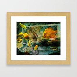 Curious Fish Framed Art Print