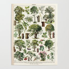 Adolphe Millot - Arbres A - French vintage botanical poster Poster