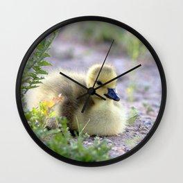 Watercolor Bird, Canada Goose Goslings 05, Longmont, Colorado Wall Clock