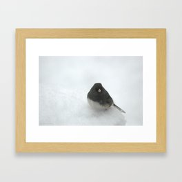 Snow Bird (Dark-eyed Junco) Framed Art Print