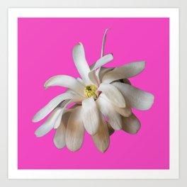 Star Magnolia on Pink Background Art Print