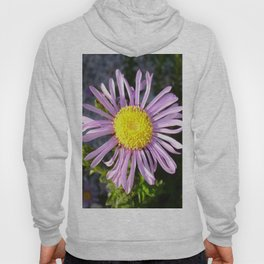 Magenta Aster - A Star of Love and Fidelity Hoody
