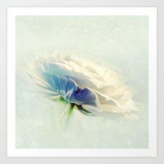 White Ranunculus Art Print