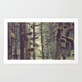 Branching Out   Forest Photograph Art Print
