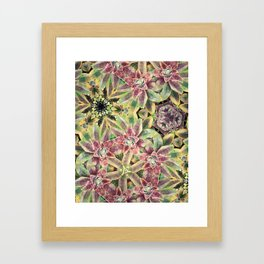 Green and Pink Succulent Framed Art Print