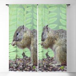 A squirrels feast Blackout Curtain