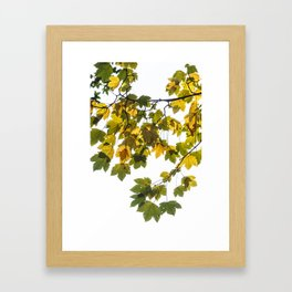 Green And Yellow Maple Leaf Framed Art Print