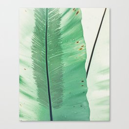 feather in a leaf Canvas Print