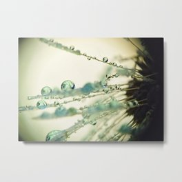 Dandelion Water Drop Macro 7 Metal Print