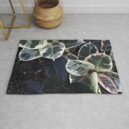 Ficus elastica Tineke  |  The Houseplant Collection Rug