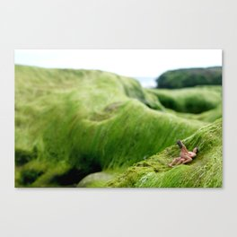 Another day in paradise Canvas Print