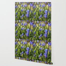 Grape hyacinths muscari Wallpaper