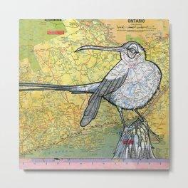 Ontario Sunbird Metal Print
