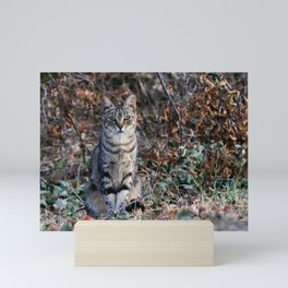 Sitting cat posing Mini Art Print