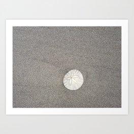 The Perfect Sand Dollar Art Print