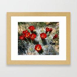 Echinocereus Triglochidiatus Hedgehog Cactusc Framed Art Print
