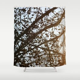 Light Leak on a Berry Tree Shower Curtain