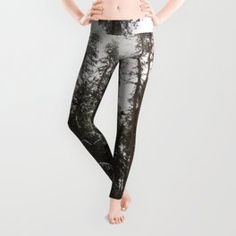 Redwood Forest Adventure II - Nature Photography Leggings