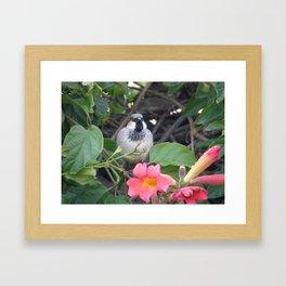 Sparrow in the Vine Framed Art Print
