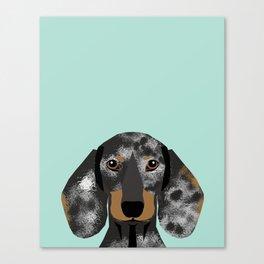 Doxie Dachshund merle dapple dog cute must have dog accessories dog gifts cute doxies dachshunds des Canvas Print