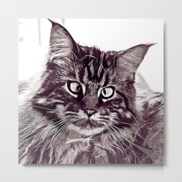 squinting maine coon cat vector art white Metal Print