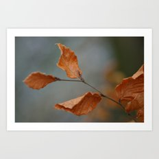 Copper Beech Art Print