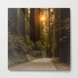 Sunrise in the Redwoods Metal Print