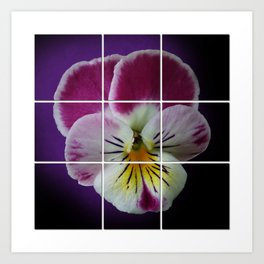 Partitioned Pansy Art Print
